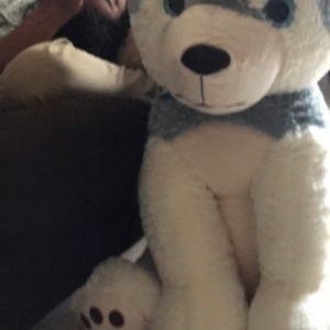 Used Soft Toy in Dubai, UAE