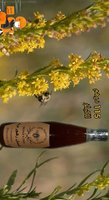 Used Wild flowers honey from uae in Dubai, UAE