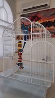 Used Parrot cage in Dubai, UAE