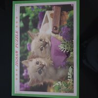 Used Jigsaw Puzzl (cats) in Dubai, UAE