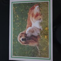 Used Jigsaw Puzzl (2 dogs) in Dubai, UAE