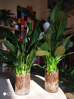 Used Self watering plants in Dubai, UAE
