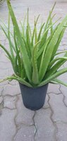Used Sets 3 plants pots in Dubai, UAE