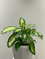Used Indoor plant in Dubai, UAE