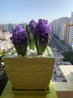 Used Real flower in Dubai, UAE