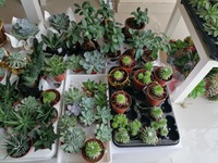 Used Decorative real plants in Dubai, UAE