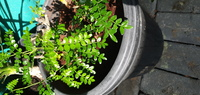 Used Live plants in Dubai, UAE