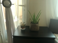 Used aloe vera plant with pot in Dubai, UAE