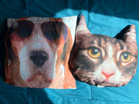 Used Dog and cat Pillow in Dubai, UAE