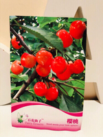 Used Cherry seeds  in Dubai, UAE