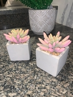 Used 2 small artificial pink plants  in Dubai, UAE