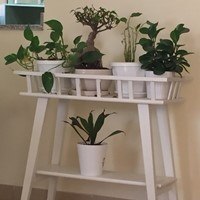 Used Plant Stand With 5 Plant  in Dubai, UAE