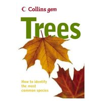 Used Trees Collins gem How To identify Trees in Dubai, UAE