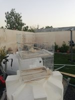 Used Bird cages in Dubai, UAE