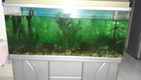 Used Aquarium with storage, gravels... in Dubai, UAE
