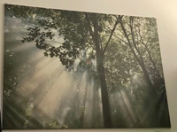 Ikea forest wall picture with frame