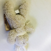 Used Bear teddy in Dubai, UAE
