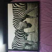 Used Zebra Canvas in Dubai, UAE