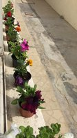 Used Flower pots ( 2 flower pots) in Dubai, UAE