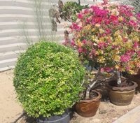 Used Plants n flowers in Dubai, UAE