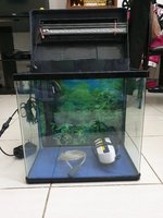 Used Aquarium/ Fish tank in Dubai, UAE
