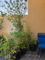 Used Plants  in Dubai, UAE