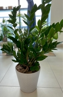 Used Plants for sale in Dubai, UAE