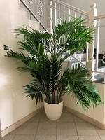 Used Palm Tree (artificial) in Dubai, UAE