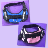 Used Dog Collar / m in Dubai, UAE