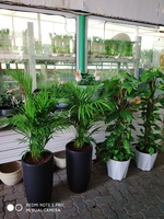 Used Fresh Green PLANTS in Dubai, UAE