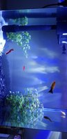 Used Aquarium full set in Dubai, UAE