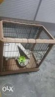 Used New cat home in Dubai, UAE