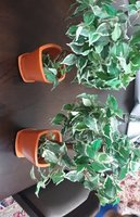 Used Plastic plants in Dubai, UAE