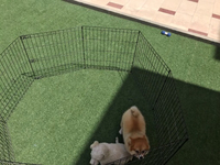 Used Dog Play pen  in Dubai, UAE