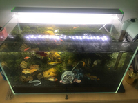 Used Real plants 55 liters aquarium 4,30 fish in Dubai, UAE