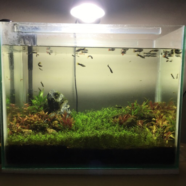 Used Planted aquarium in Dubai, UAE