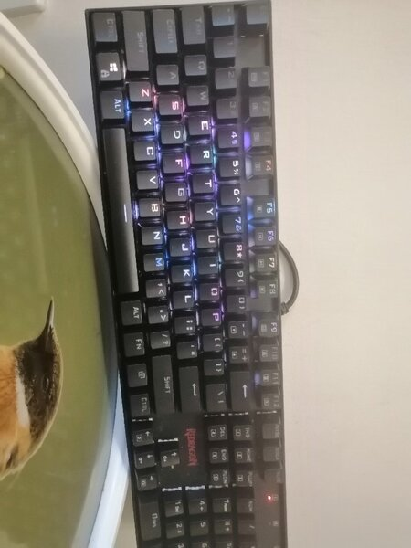 Used k551 And the g502 And a mouse pad and ot in Dubai, UAE