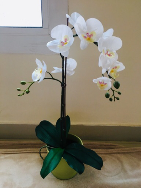 Used BEAUTIFUL ORCHID in Dubai, UAE