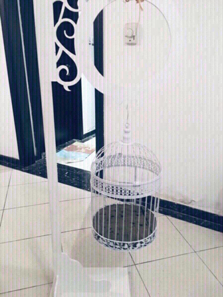 Used Bird cage 🐦 in Dubai, UAE