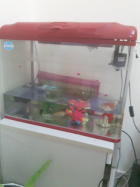 Used Fish tank in Dubai, UAE