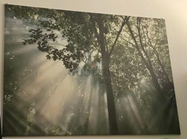 Used Ikea forest wall picture with frame in Dubai, UAE