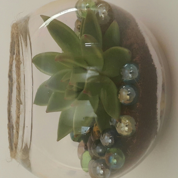 Handmade Terrarium With Marbel Effect Melltoo Com Uae