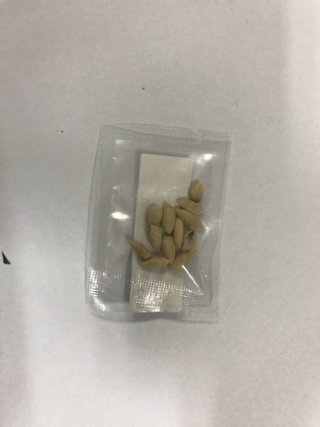 Used Seeds 1x in Dubai, UAE