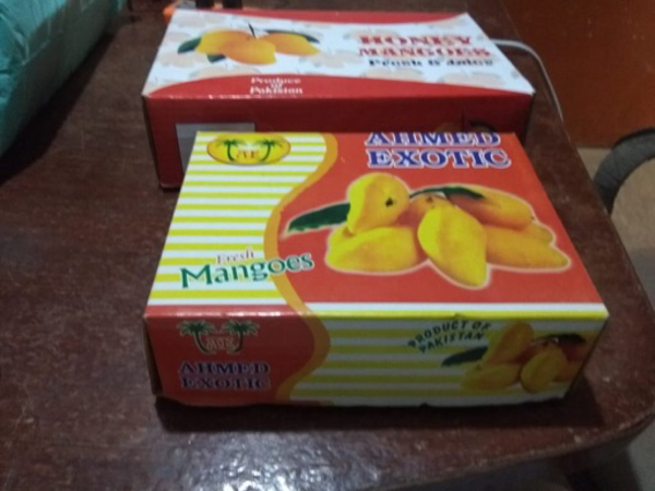Used Mango from Pakistan best ever in Dubai, UAE