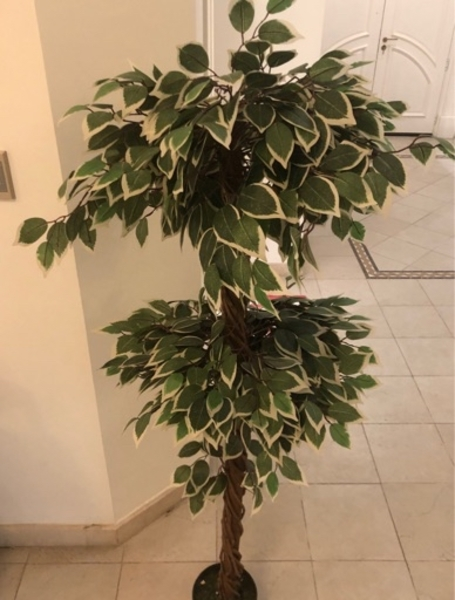 Used Ficus Tree (Artificial) in Dubai, UAE