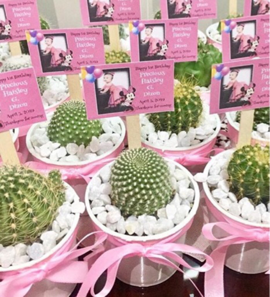Used Customize Giveaways cactus and succulent in Dubai, UAE