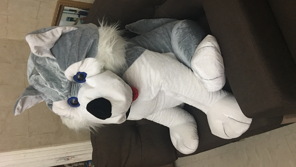 Used Dog doll in Dubai, UAE