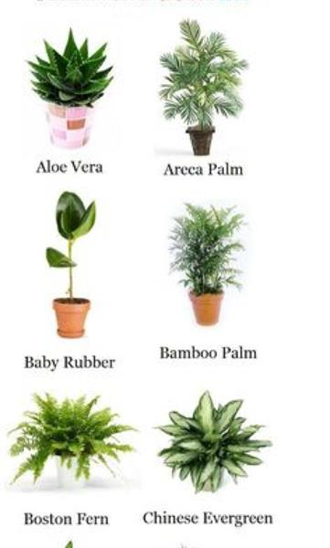 Used all types of plants for sale fresh and new deliver in door any where in dubai  in Dubai, UAE