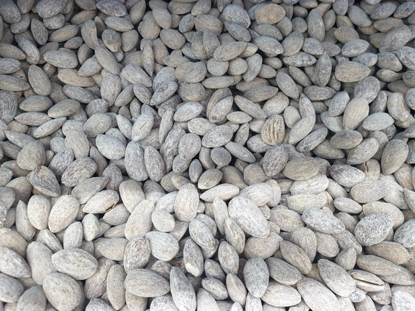 Used Almonds with different flavour in Dubai, UAE