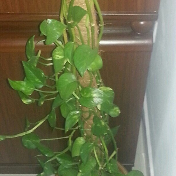Used Adorable indoor plants for sale in Dubai, UAE